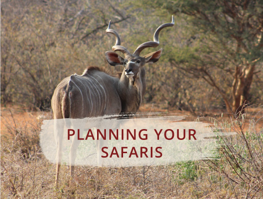 Planning your safaris